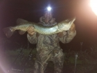 Wally Pickering 16lbs 2oz Pike from river idle. got this pike on river idle , with a full moon in the back ground..