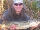 Wally Pickering 8lbs 12oz Pike, dead bait mackrel.. this is my last pike of 2015 lovely marked pike from the river idle, I be back here in the new year...