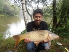 Sudhir Meneaud 8lbs 0oz Common Carp from Sweet Chestnut Lake