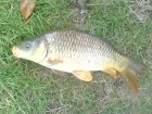 Joe North 12lbs 8oz Common Carp from barby banks