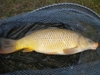 3lbs 10oz Common Carp from Millride Fishery using Pyramid tutti frutti.