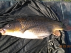 6lbs 1oz Common Carp from Tackeroo using Pyramid tutti frutti.