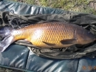 11lbs 1oz Common Carp from Tackeroo using Pyramid tutti frutti.