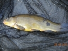 3lbs 13oz Tench from Tackeroo using Pyramid tutti frutti.
