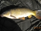 6lbs 13oz Common Carp from Turf pool using Mainline Cell.