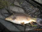 4lbs 4oz Mirror Carp from Tackeroo using Mainline Fusion.