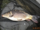 2lbs 13oz Mirror Carp from Tackeroo using Mainline Cell.