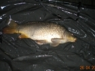 9lbs 6oz Common Carp from Turf pool using Mainline Grange CSL.