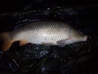 Andy Hyden 12lbs 8oz Common Carp from fisherwick using cell / grange.