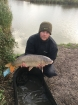 Dan Ward 13lbs 0oz Carp, Nash Pineapple.. Common carp 13lb specimen lake burnham holiday village.taken about 3 feet away from the middle island.free running in-line lead size 6 hook with long hair