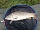 Dan Glover 4lbs 0oz Common Carp from Fletchers. method feeder
