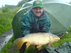 14lbs 0oz Common Carp from Trent And Mersey Canal using Solar Club Mix (Squid & Octopus, Stimulin and Anchovy).