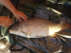 15lbs 14oz Mirror Carp from Rookley Country Park