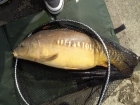 Steven Forntum 14lbs 5oz Mirror Carp from Drayton Reservoir