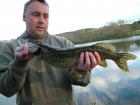 3lbs 0oz Pike from Local Club Water using Shad.. Nice few jacks in an afternoon