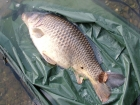 Kieron Axten 19lbs 0oz Common Carp from Local Club Water using Mainline Grange CSL.