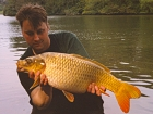 13lbs 15oz Ghost Common Carp from Trentham Gardens using Mainline Grange CSL.
